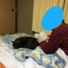 甲斐犬サン、オットとの距離感Σ(゚∀´(┗┐ヽ(・∀・ )ノ