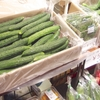 有機野菜販売します!@札幌駅地下歩行空間 7/30