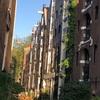 海外旅行 アムステルダムの街の家々、交通(自転車)について