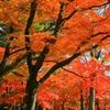 紅葉⑪竹林と