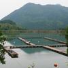 長谷大池(兵庫県丹波)