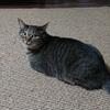 我が家の猫「かまど」は変わった名前だけど、ちゃんと自分の名前を認識しているらしい。