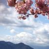 『まつだ桜まつり』3月1日まで開催中!