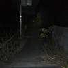 沖縄までチャリ 〜9日目〜 「一寸先は闇。振り返るな...」