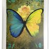 変容の青い蝶から変化に抵抗しない