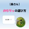 【鳥さん】おもちゃの選び方【安全第一】