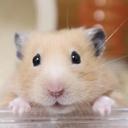 げっ歯類くらぶ|ハムスター飼育ブログ