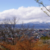 花咲く若木山公園と葉山