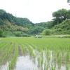 「通い稲作塾」草取りも人生も振り返らずに前のめり!