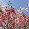 春風を満喫するライチ
