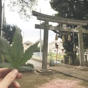 JAPAN WEED LIBRARY