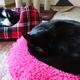 今日の黒猫モモ&白黒猫ナナの動画ー678