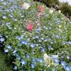 フローランテと風媒花