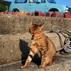猫ブログではありませんが・・・
