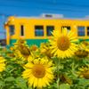 ヒマワリ電車:布市駅