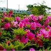 横浜市栄区(JR根岸線Vol.4)