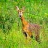 森の中で鹿と目が合う