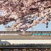 2021年春,東京都の桜もきれいだったから写真を上げておこう