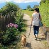 犬の散歩をしている人にイライラ