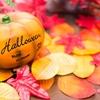 【副業にオススメ!】かぼちゃを貯蔵してから売る【抑制栽培】