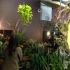 素敵な観葉植物に囲まれたい。長年の私の夢が叶いそう。(UTSUWA @San Francisco)