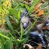 渡り鳥が庭にいましたよ。これから南に向かうようです。