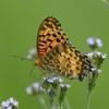色んな蝶たちが舞う