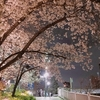 仕事帰りの夜桜に思うこと