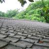 屋根の上を駆け回る