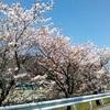 春来たる!