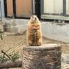 秋田県民なら【大森山動物園】行くしかないでしょ!