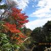 紅葉狩りハイキング