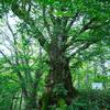 価値観の根を深め、アイデアの花を咲かそう 〜人生の理解を木に喩えて〜