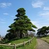 「木」・一年生の思い出・50…