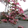 晩春から初夏へ 学校の花たち
