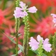 伏見川の彼岸花以外の花