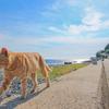 福岡市から近くて癒される猫の島に行ってみた!①【相島】