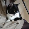 今日の黒猫モモ&白黒猫ナナの動画ー912
