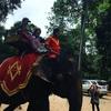 アンコールワット個人ツアー(146)アンコールワットと象さん
