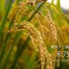 二十四節気七十二候71 「処暑 禾乃登」 (2016/9/2)
