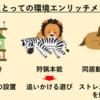 【猫の特発性膀胱炎(FIC)②】診断と治療法