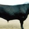 和牛についての勉強会。