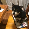 犬と同じ卓に着く