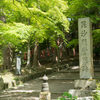 京都 青モミジの名刹 毘沙門堂