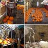 ハロウィーン、パンプキンパッチ遠足 Clancy's Pumpkin Patch