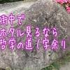 京都の街中でホタルが見られる!「哲学の道」へ行ってみた