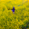 4K Drone Japan【菜の花ロード】空撮ドローン 絶景 ドローン男子