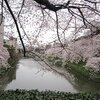 千鳥ヶ淵のお花見で桜とカレーを堪能!