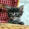猫を迎えたらそっと見守りつつじっと観察!