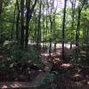 森のコテージ。
